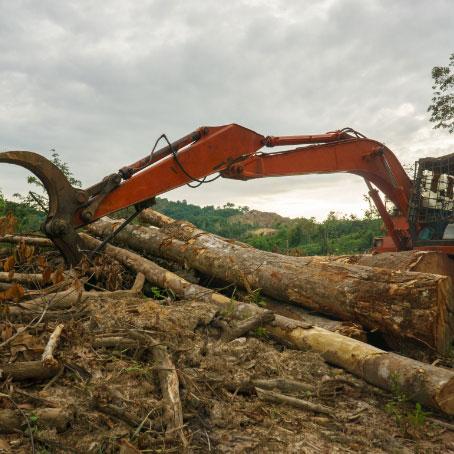 A feller buncher grabbing fallen logs